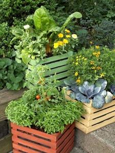 container gardening2