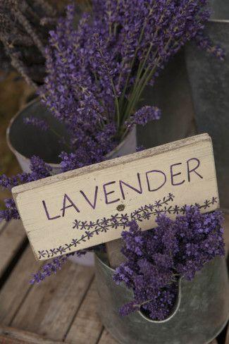 lavendar 1